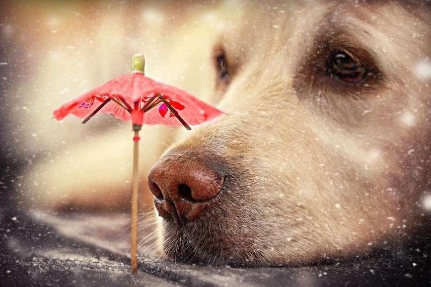 Любимый собачий нос
