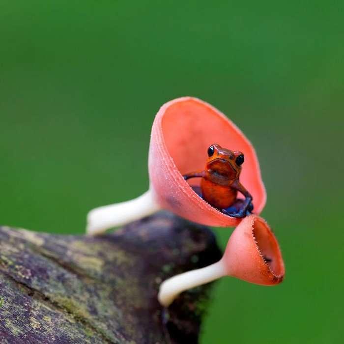 Удивительные лягушки в природе