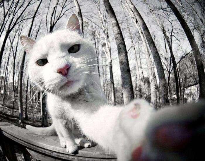 Коты тоже любят селфи