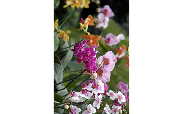 IV Зимний фестиваль орхидей в Ботаническом саду