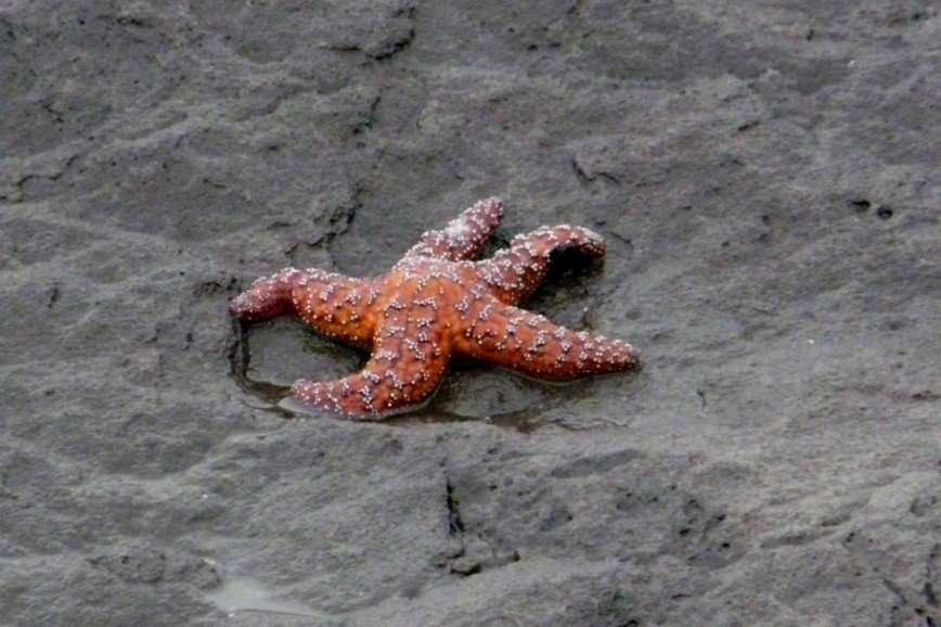Интересные факты о морских звездах